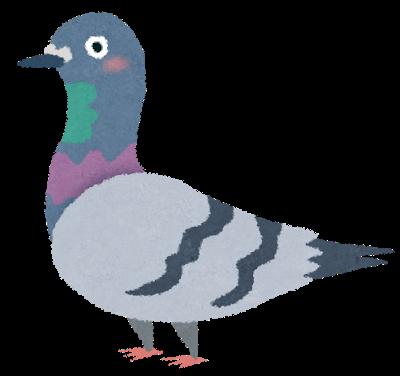 鳥のフンのシミ