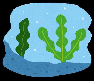 海藻のシミ