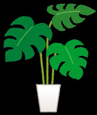運気アップの観葉植物
